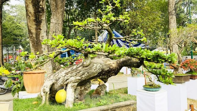 Hàng nghìn loại 'kì hoa dị thảo' đổ bộ chợ hoa xuân Sài Gòn ảnh 13