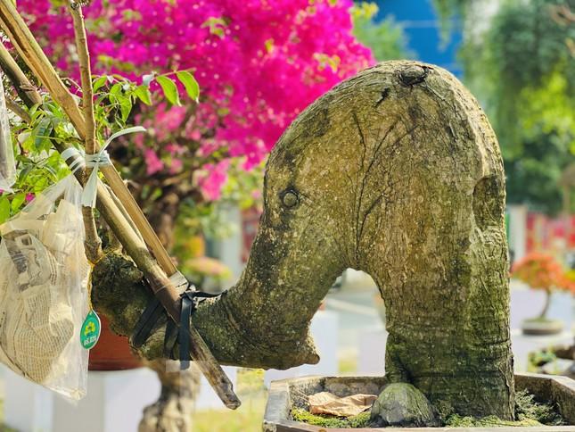 Hàng nghìn loại 'kì hoa dị thảo' đổ bộ chợ hoa xuân Sài Gòn ảnh 20