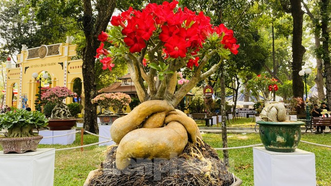 Hàng nghìn loại 'kì hoa dị thảo' đổ bộ chợ hoa xuân Sài Gòn ảnh 19