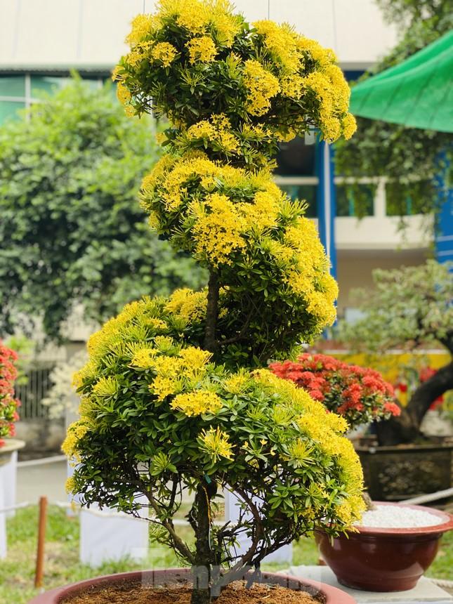 Hàng nghìn loại 'kì hoa dị thảo' đổ bộ chợ hoa xuân Sài Gòn ảnh 25