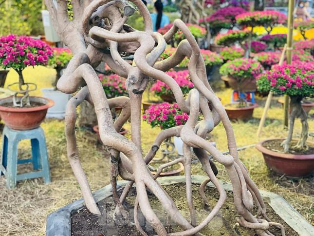 Hàng nghìn loại 'kì hoa dị thảo' đổ bộ chợ hoa xuân Sài Gòn ảnh 23