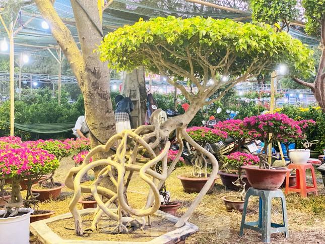 Hàng nghìn loại 'kì hoa dị thảo' đổ bộ chợ hoa xuân Sài Gòn ảnh 24