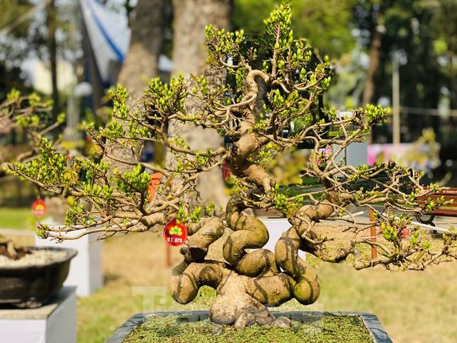 Hàng nghìn loại 'kì hoa dị thảo' đổ bộ chợ hoa xuân Sài Gòn ảnh 22
