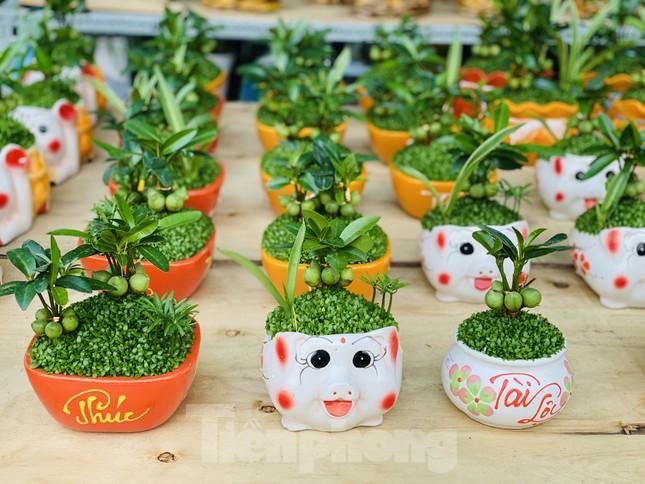 Hàng nghìn loại 'kì hoa dị thảo' đổ bộ chợ hoa xuân Sài Gòn ảnh 28