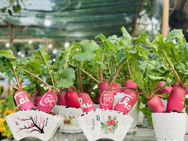 Hàng nghìn loại 'kì hoa dị thảo' đổ bộ chợ hoa xuân Sài Gòn ảnh 8