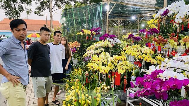 Quất cảnh hình chuột khan hiếm ở chợ hoa Sài Gòn ảnh 10