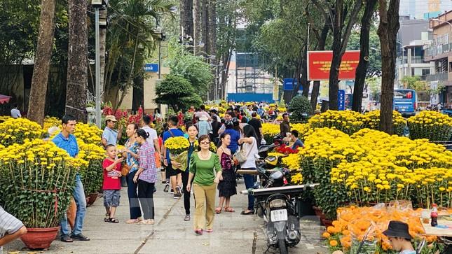 Quất cảnh hình chuột khan hiếm ở chợ hoa Sài Gòn ảnh 11
