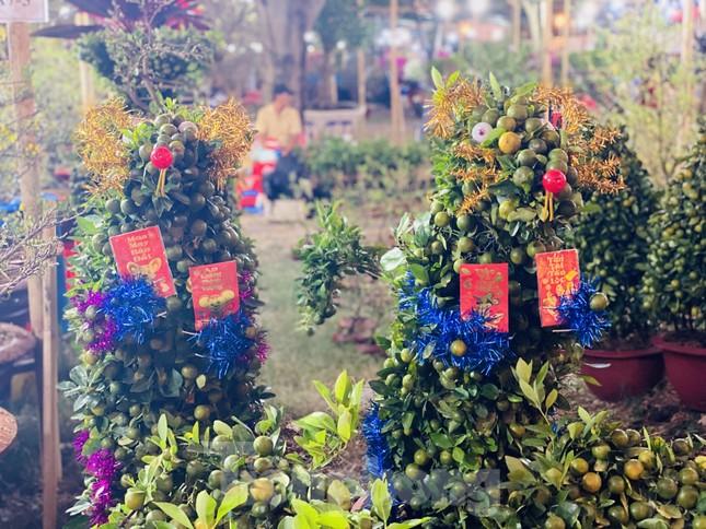 Quất cảnh hình chuột khan hiếm ở chợ hoa Sài Gòn ảnh 1