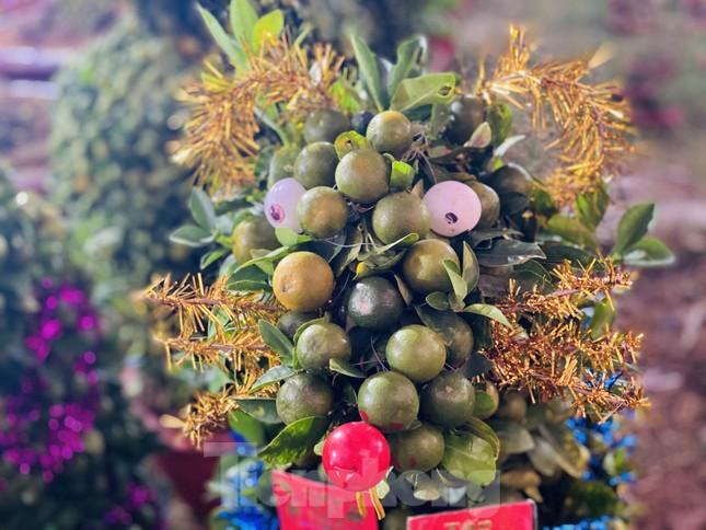 Quất cảnh hình chuột khan hiếm ở chợ hoa Sài Gòn ảnh 2