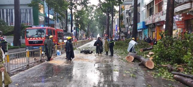 Cây đổ chết người, TPHCM yêu cầu tăng cường quản lý cây xanh ảnh 2