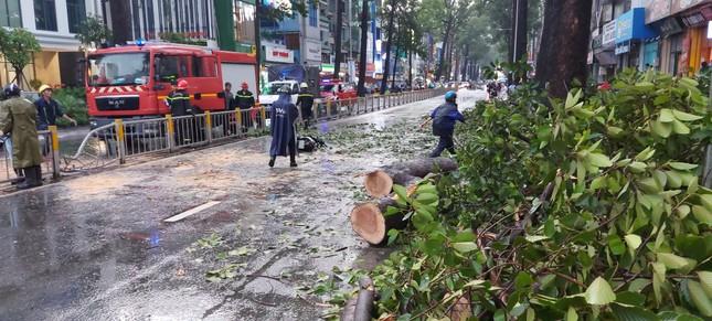 Người chết do cây ngã ở TPHCM, lộ nguyên nhân bất ngờ! ảnh 2