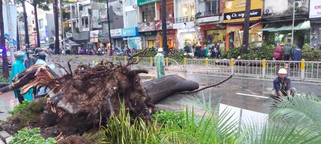 Cây đổ chết người, TPHCM yêu cầu tăng cường quản lý cây xanh ảnh 1