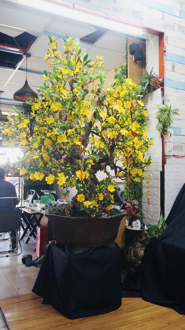 Độc đáo cây mai 'khủng' được tạo nên từ 35kg đất sét ảnh 12