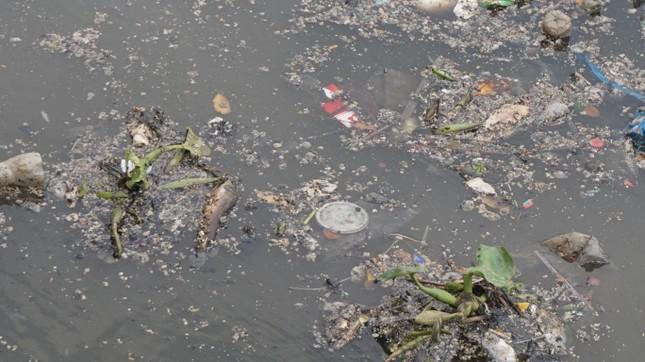 Hai cơn mưa ở TPHCM làm chết gần 14 tấn cá trên kênh ảnh 13
