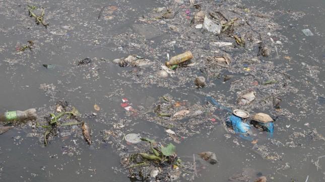 Hai cơn mưa ở TPHCM làm chết gần 14 tấn cá trên kênh ảnh 12