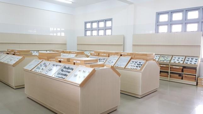 Gặp thầy giáo Hàn Quốc xây dựng bảo tàng Côn trùng tại Việt Nam ảnh 4
