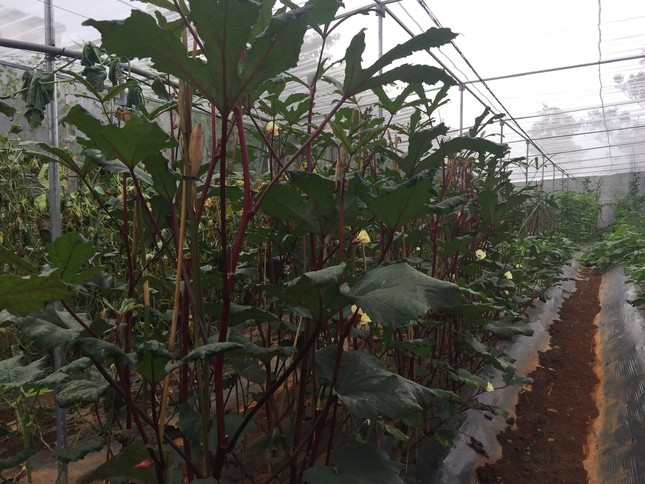 Nữ Bí thư huyện Đoàn và dự án nông nghiệp sạch ảnh 4
