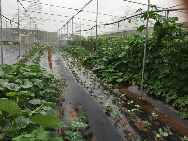 Nữ Bí thư huyện Đoàn và dự án nông nghiệp sạch ảnh 2