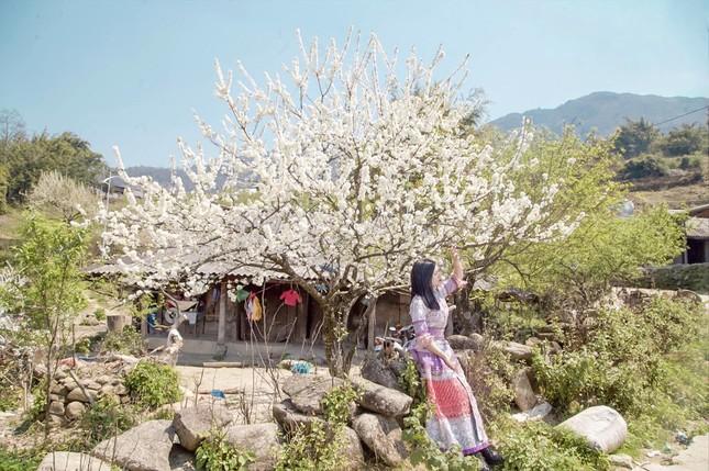 """Cô giáo trẻ hóa thân thành """"nàng thơ"""" giữa rừng hoa mận Sa Pa ảnh 11"""