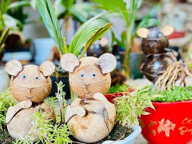 Dừa bonsai hình chuột đắt khách ảnh 1