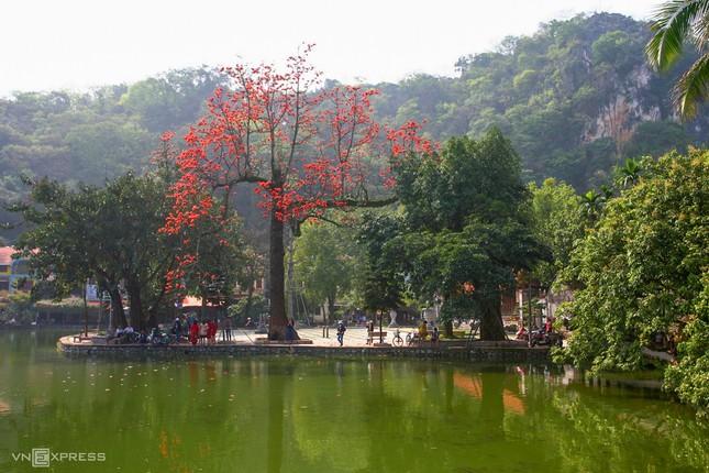 Rực đỏ hoa gạo trước sân chùa Thầy ảnh 3