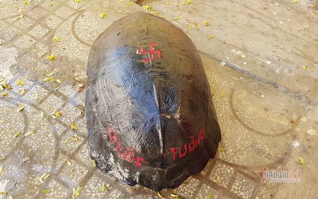 'Cụ rùa' sống dưới tượng phật Quan Âm trong chùa ở miền Tây ảnh 4