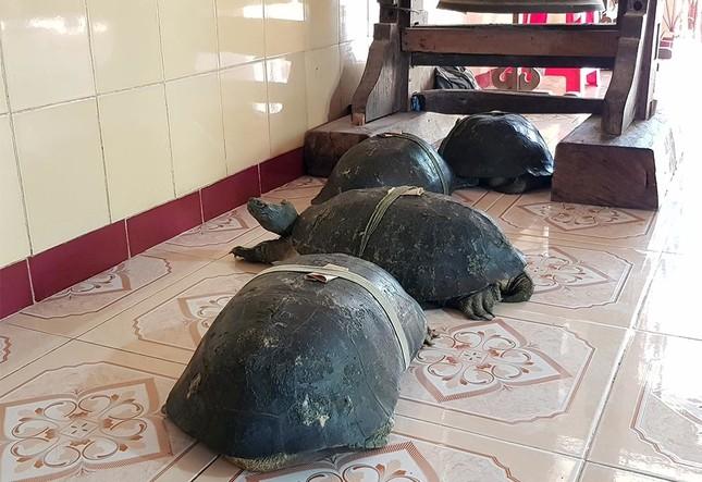 'Cụ rùa' sống dưới tượng phật Quan Âm trong chùa ở miền Tây ảnh 7