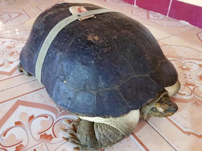 'Cụ rùa' sống dưới tượng phật Quan Âm trong chùa ở miền Tây ảnh 8