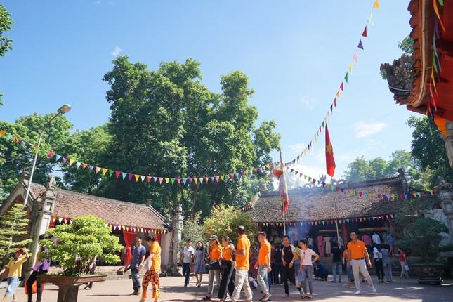 Rừng lim cổ thụ ở Hà Nội ảnh 9