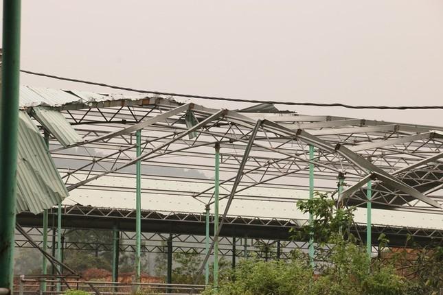 Cảnh hoang tàn bên trong dự án nuôi bò nghìn tỷ ở Hà Tĩnh ảnh 3