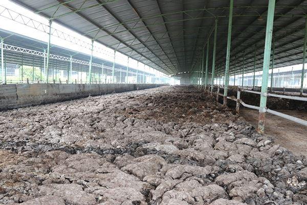 Cảnh hoang tàn bên trong dự án nuôi bò nghìn tỷ ở Hà Tĩnh ảnh 19