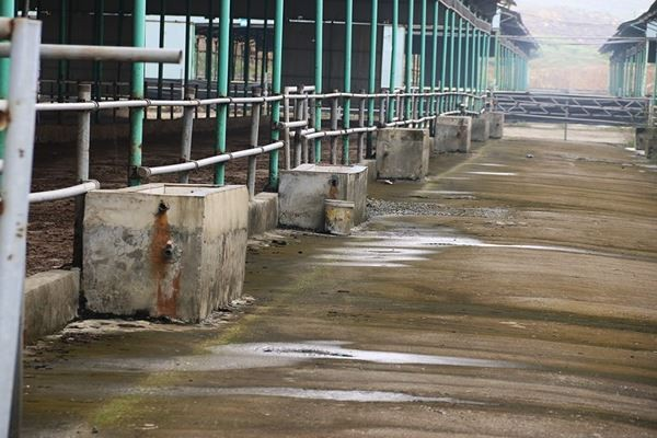 Cảnh hoang tàn bên trong dự án nuôi bò nghìn tỷ ở Hà Tĩnh ảnh 14