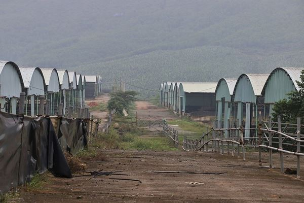 Cảnh hoang tàn bên trong dự án nuôi bò nghìn tỷ ở Hà Tĩnh ảnh 17