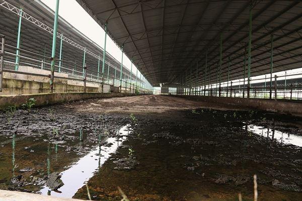 Cảnh hoang tàn bên trong dự án nuôi bò nghìn tỷ ở Hà Tĩnh ảnh 13