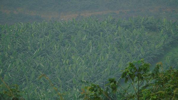 Cảnh hoang tàn bên trong dự án nuôi bò nghìn tỷ ở Hà Tĩnh ảnh 20