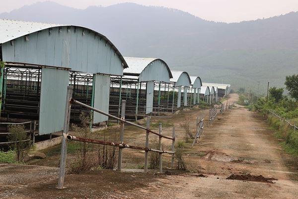 Cảnh hoang tàn bên trong dự án nuôi bò nghìn tỷ ở Hà Tĩnh ảnh 6