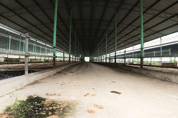 Cảnh hoang tàn bên trong dự án nuôi bò nghìn tỷ ở Hà Tĩnh ảnh 7