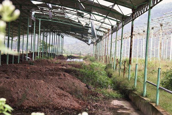 Cảnh hoang tàn bên trong dự án nuôi bò nghìn tỷ ở Hà Tĩnh ảnh 8