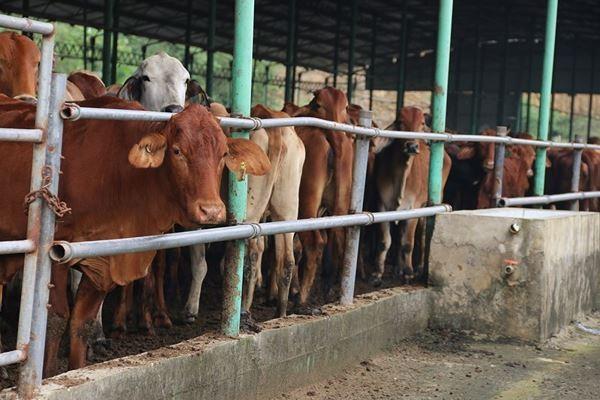 Cảnh hoang tàn bên trong dự án nuôi bò nghìn tỷ ở Hà Tĩnh ảnh 1
