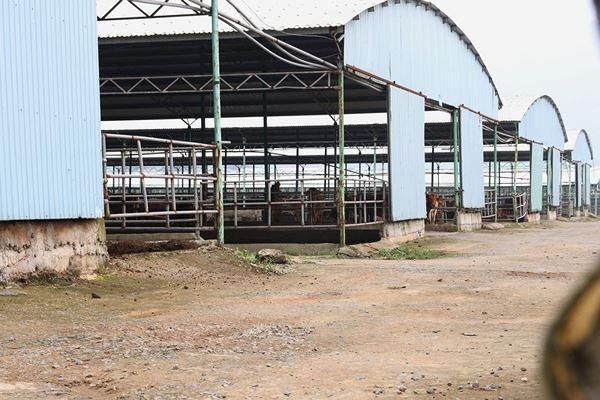 Cảnh hoang tàn bên trong dự án nuôi bò nghìn tỷ ở Hà Tĩnh ảnh 9