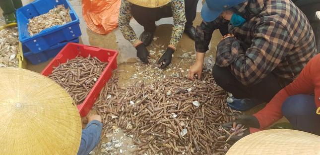 Ngư dân Hà Tĩnh 'trúng mánh', mỗi ngày thu đến 20 triệu từ ốc xoắn, sò nhám ảnh 3