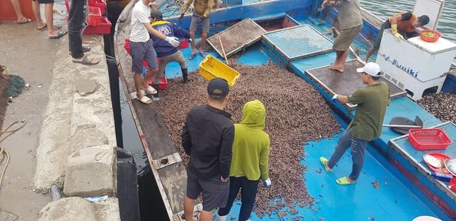 Ngư dân Hà Tĩnh 'trúng mánh', mỗi ngày thu đến 20 triệu từ ốc xoắn, sò nhám ảnh 1