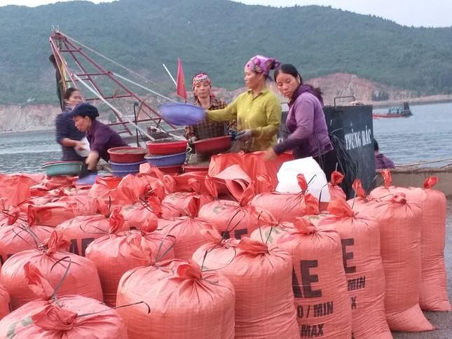 Ngư dân Hà Tĩnh 'trúng mánh', mỗi ngày thu đến 20 triệu từ ốc xoắn, sò nhám ảnh 4