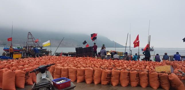 Ngư dân Hà Tĩnh 'trúng mánh', mỗi ngày thu đến 20 triệu từ ốc xoắn, sò nhám ảnh 5