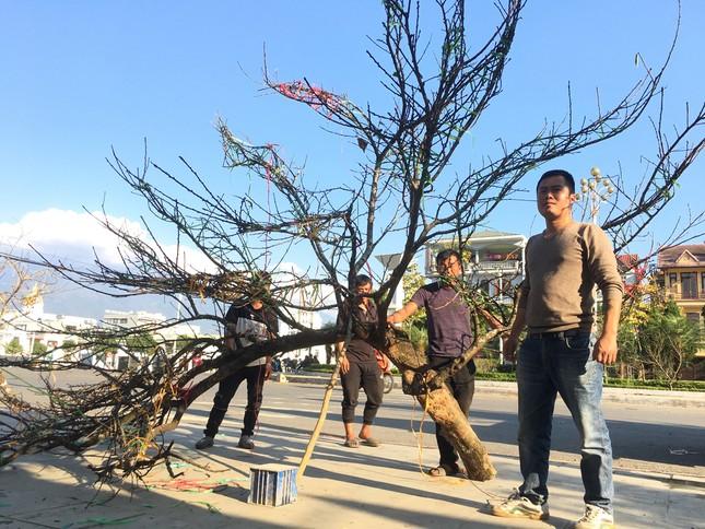 Lên Lai Châu săn đào, bán liền tay lãi ngay trăm triệu ảnh 4