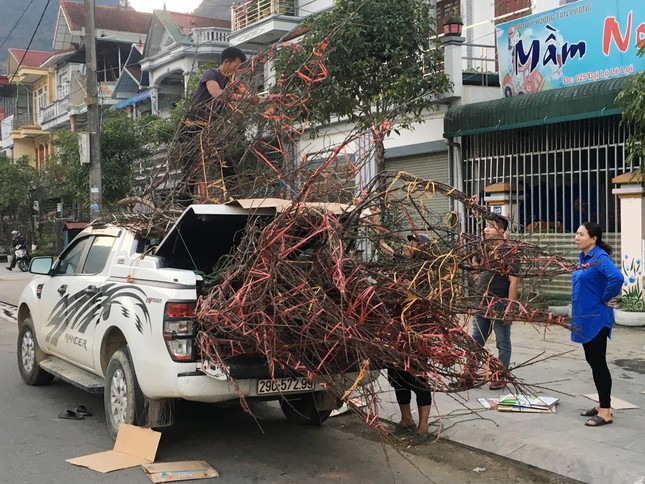Lên Lai Châu săn đào, bán liền tay lãi ngay trăm triệu ảnh 14