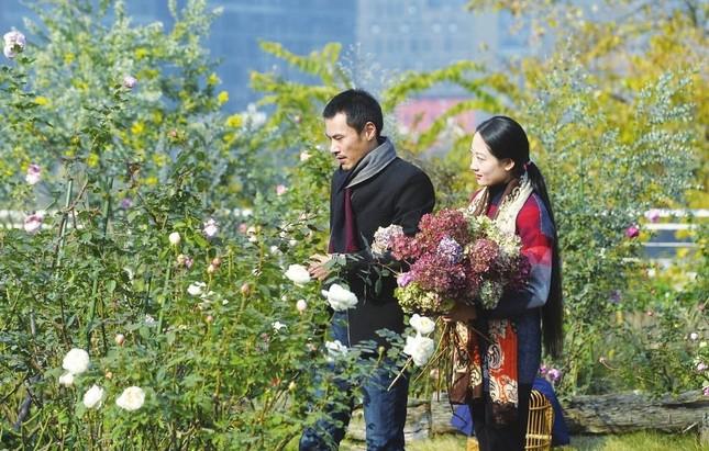 Lạc vào chốn thần tiên trên cao lớn nhất của cặp đôi trồng 200 loại hoa hồng không cần đất ảnh 4