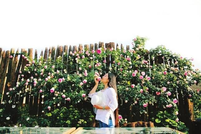 Lạc vào chốn thần tiên trên cao lớn nhất của cặp đôi trồng 200 loại hoa hồng không cần đất ảnh 7