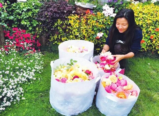 Lạc vào chốn thần tiên trên cao lớn nhất của cặp đôi trồng 200 loại hoa hồng không cần đất ảnh 5