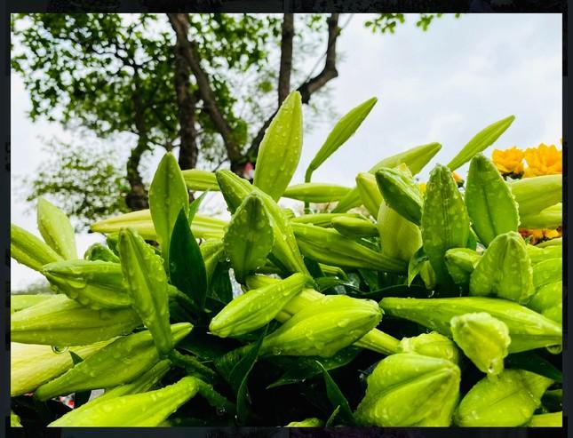 Phố phường Hà Nội lãng mạn với sắc trắng hoa Loa kèn ảnh 4